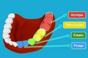 nazvaniia-zubov